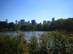 central park (Copy)